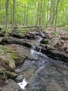 Mountain bedrock stream