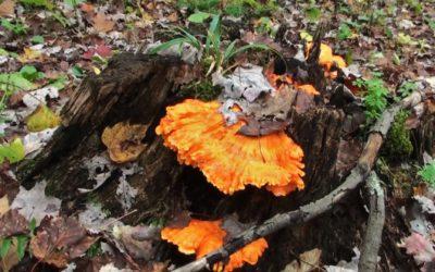 Fall Mushroom Hunting in Pennsylvania  | John Royer, Leatherwood Outdoors
