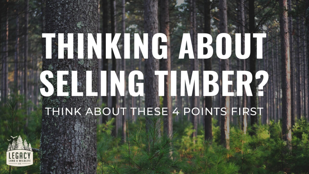 four-tips-for-selling-timber-on-your-property